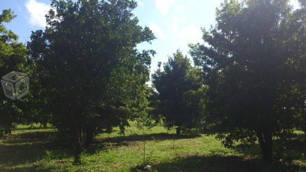 Rancho d 18 hectareas en exhacienda koben