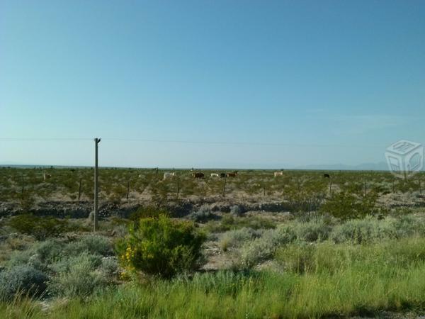 Rancho ganadero en Coyame